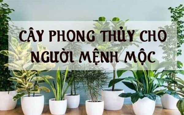 Cay Cho Nguoi Menh Moc